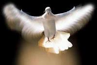 dove good